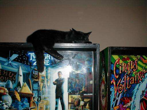 cat on twilight zone pinball machine