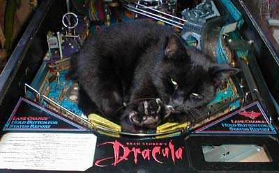 cat clawing on Dracula pinball machine