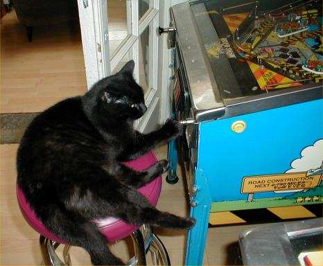 cat playing pinball