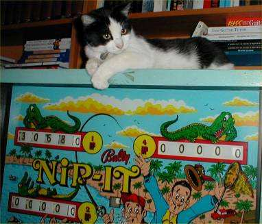cat on pinball machine