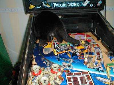 cat in pinball machine